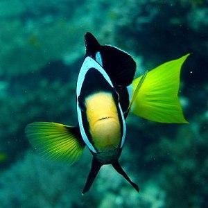 Unterwasserwelt von Ko Phi Phi