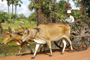Fortbewegungsmittel in Kambodscha